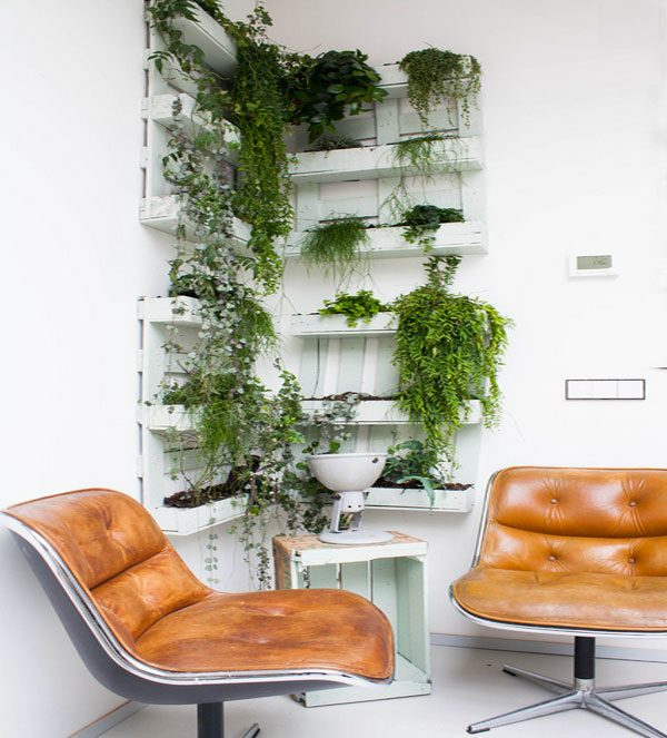 indoor plants decor