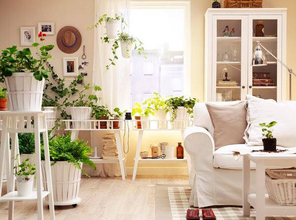 plants for home decor