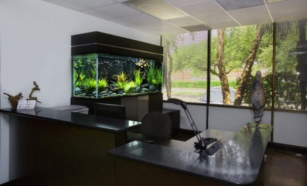 aquarium for office