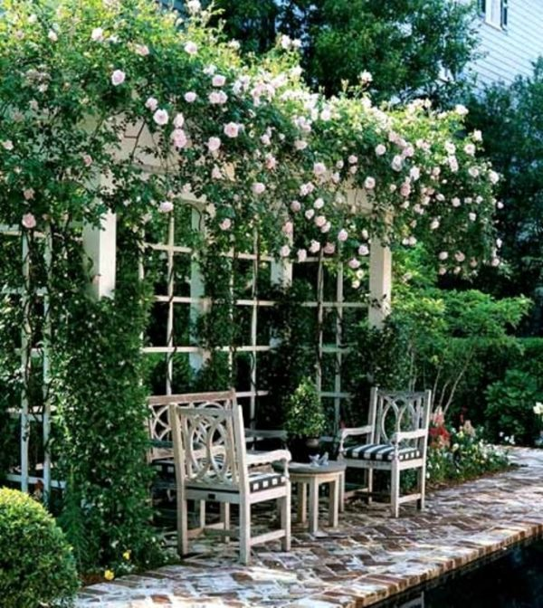 backyard rose gardens