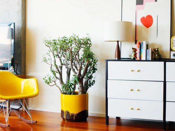 decorative pots for indoor plants