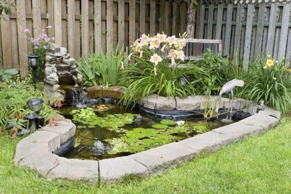 garden pond plants