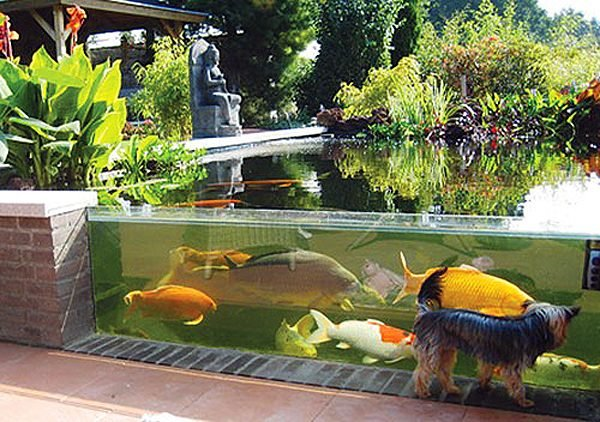 Outdoor Aquarium LittlePieceOfMe