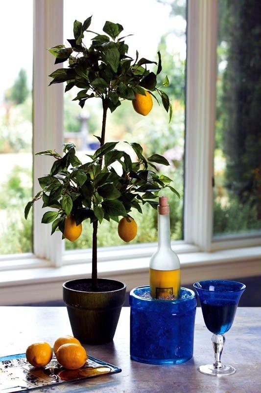 lemon tree indoor