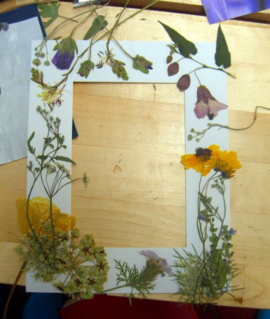 dried flower pictures