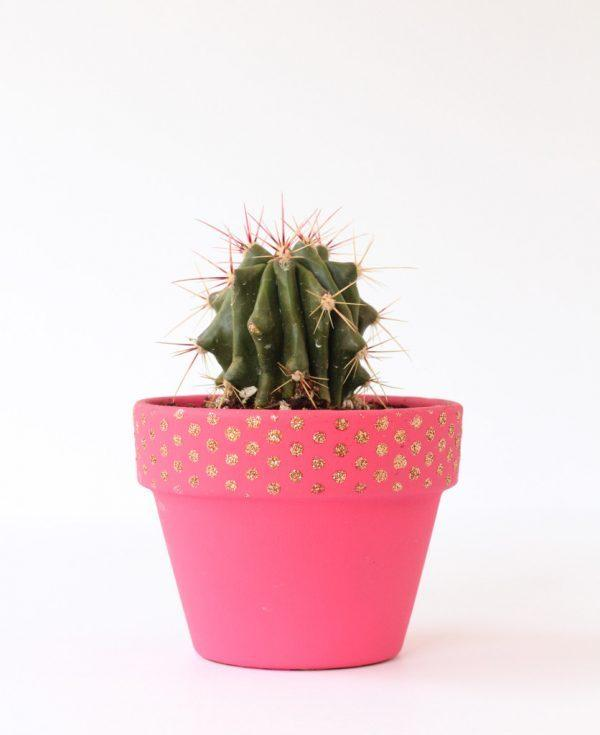small decorative plant pots