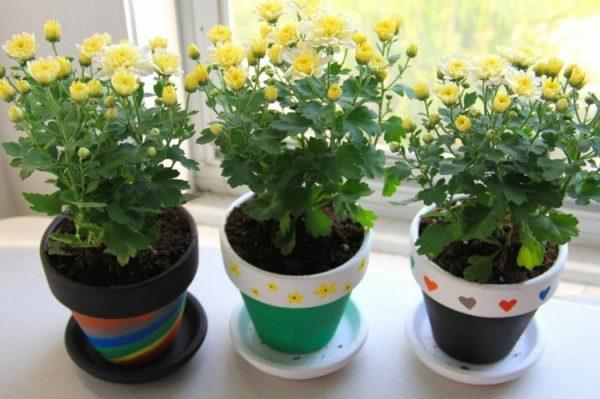 decorate your own flower pot