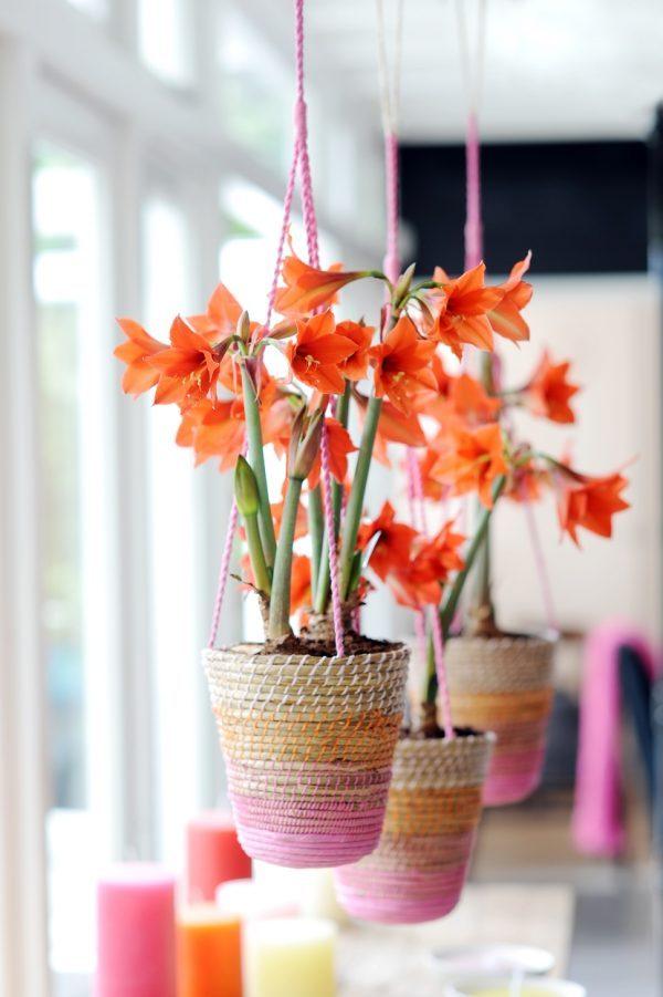 Hanging plant hangers