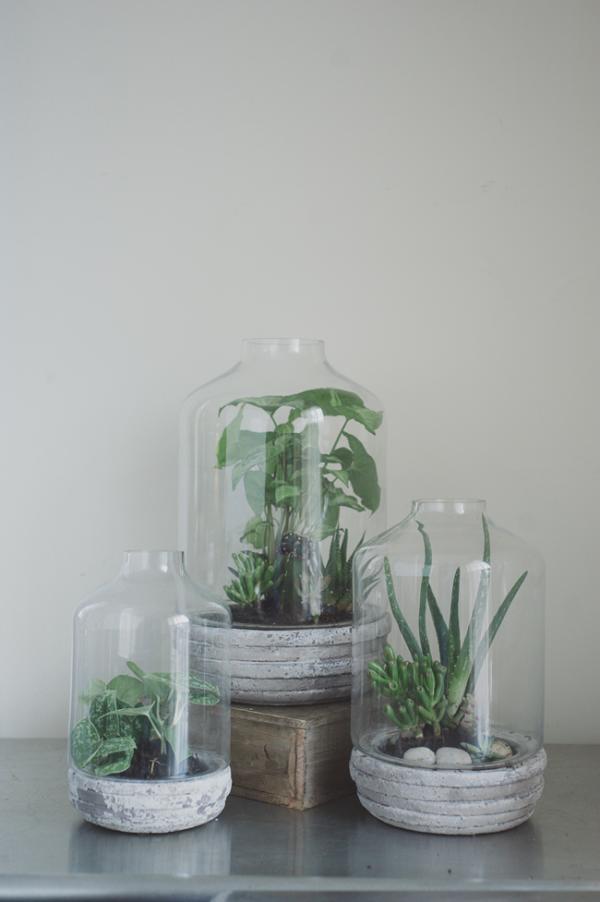 concrete terrarium
