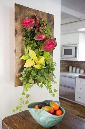 indoor plant wall