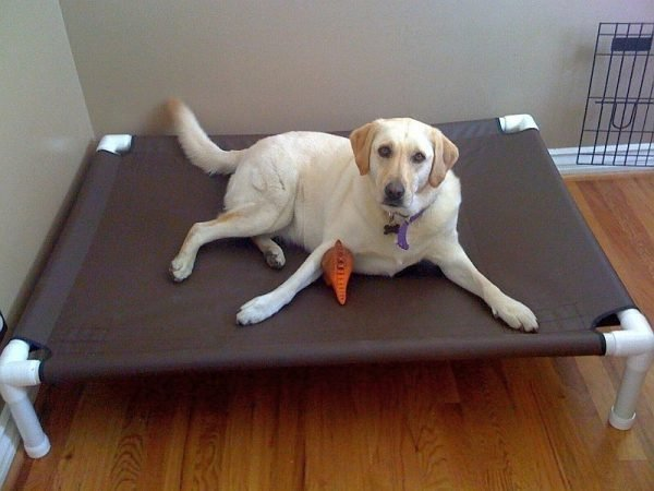 pvc pipe dog bed