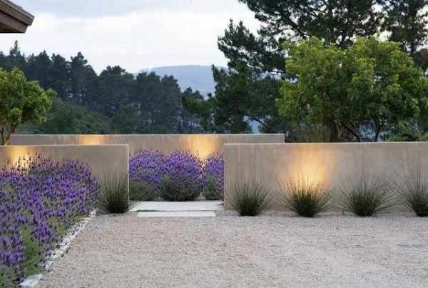 planting lavender outside