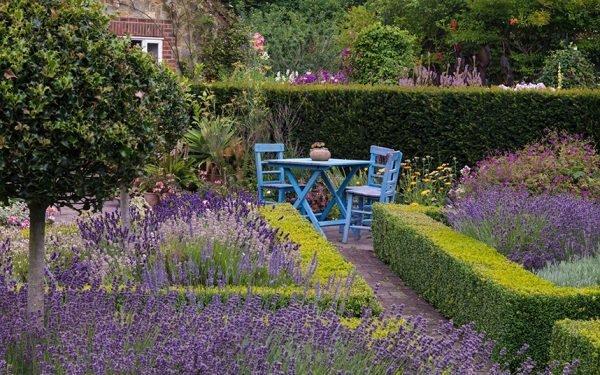 lavender flower garden