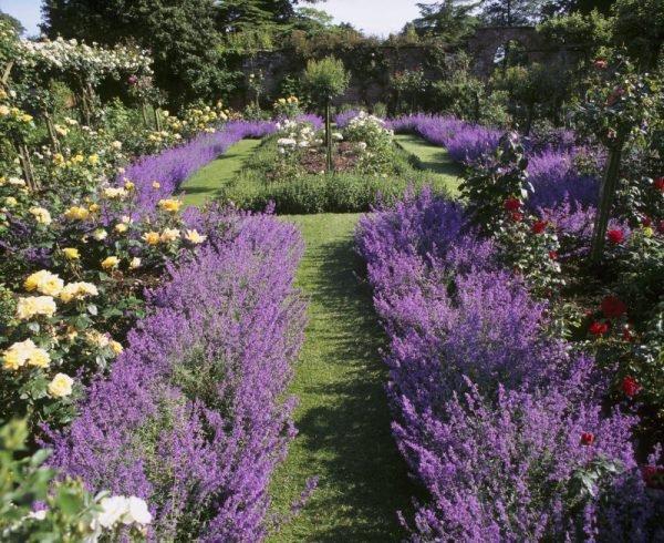 Exceptionnel The Lavender Garden