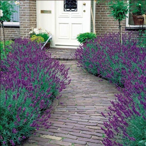 the lavender garden 1
