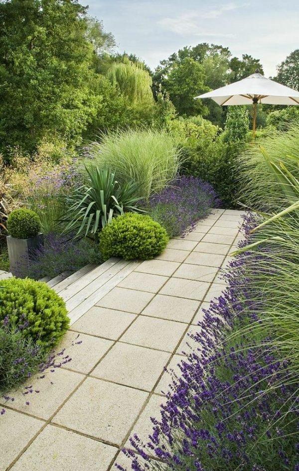 planting lavender outside 1