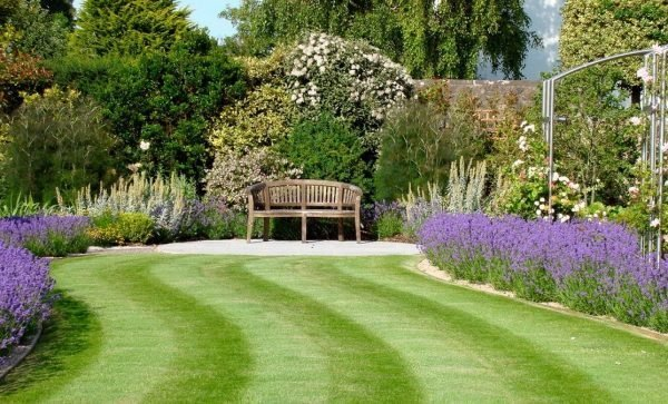 landscaping with lavender 1