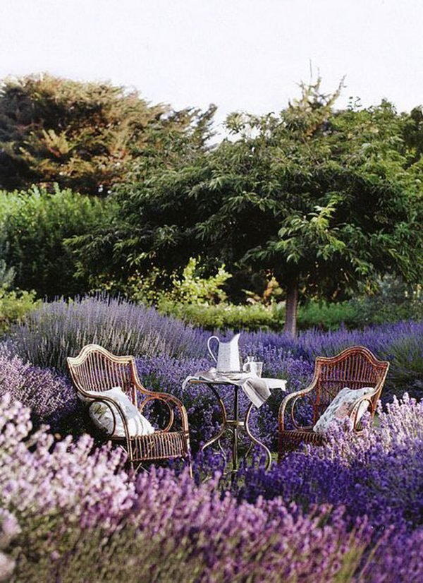 landscaping with lavender 2