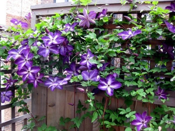inexpensive privacy fencing ideas