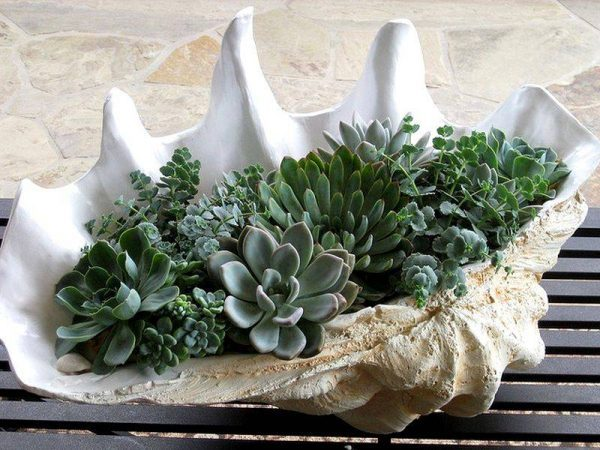 seashell outdoor planter
