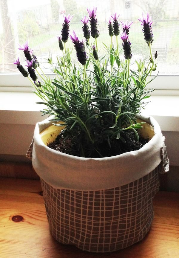 lavender home decor