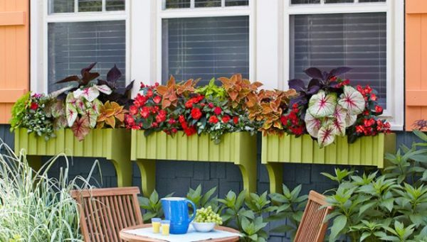 window planter boxes