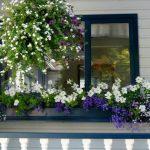 15 Beautiful window gardens