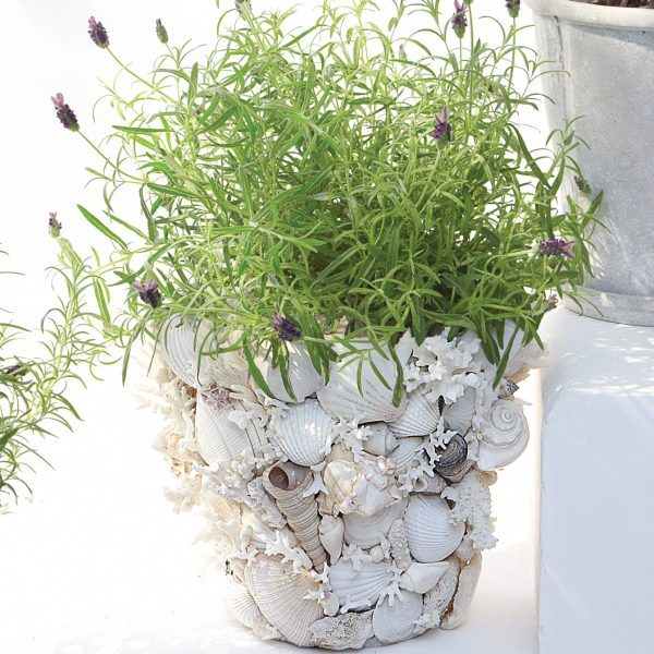 seashell decoration ideas