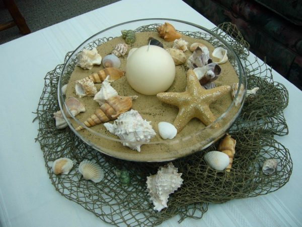 seashells for decoration