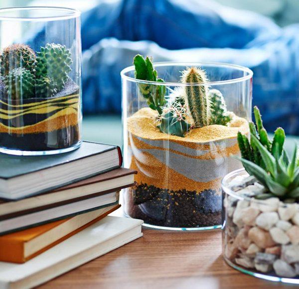 best plants for office desk1