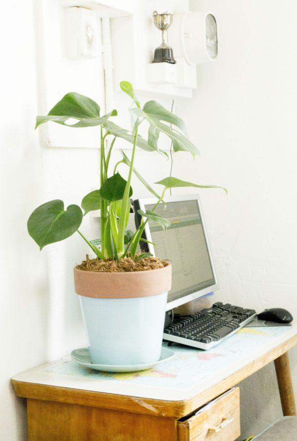 best office desk plants