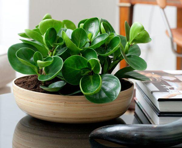 best plants for office desk