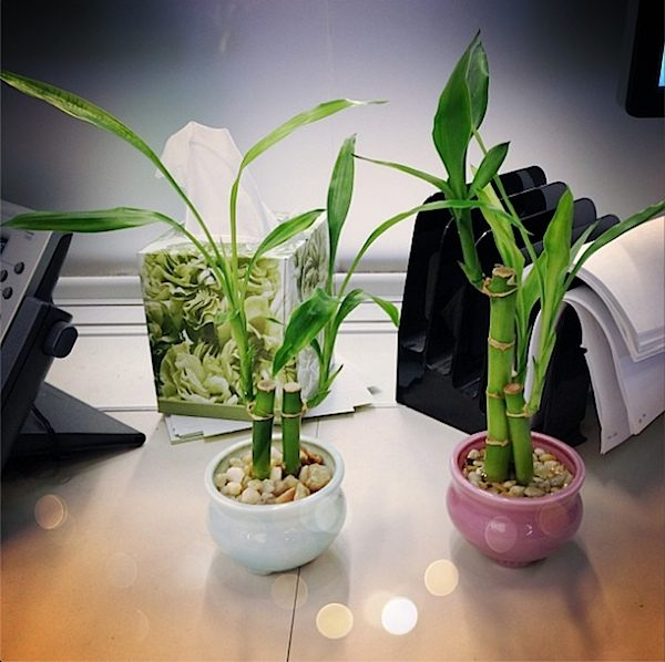 great plants for the office