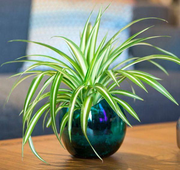 plants for office desk