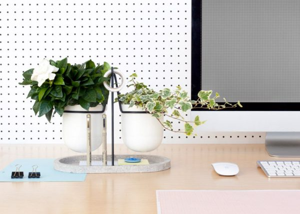 pretty office plants
