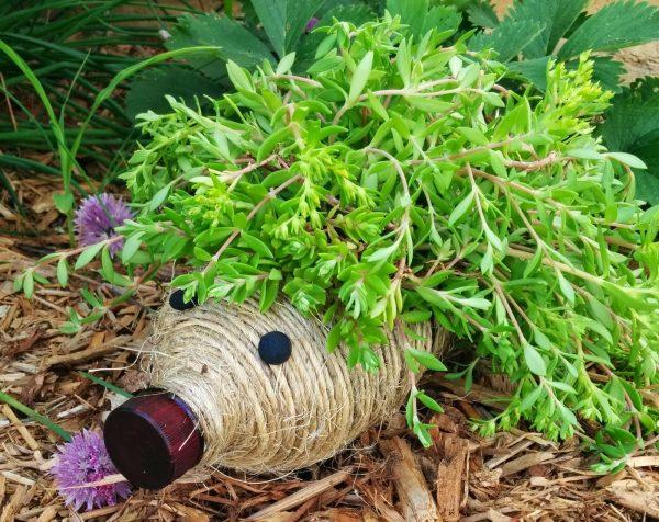 plants in water bottles