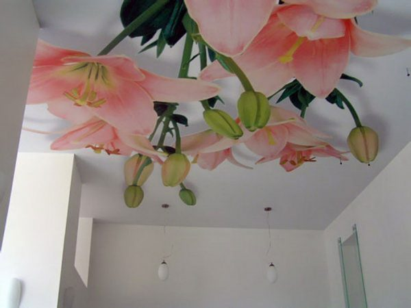 ceiling wallpaper murals
