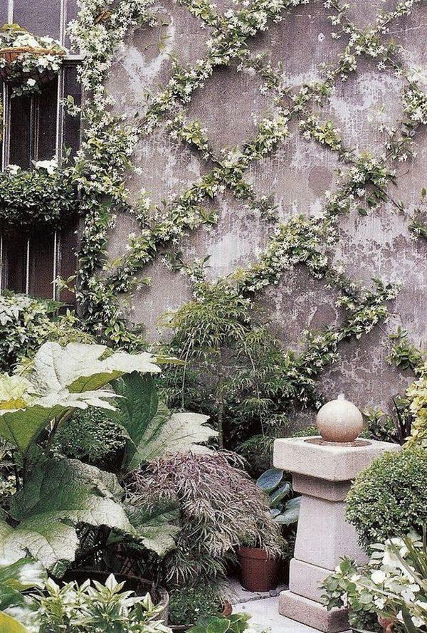 climbing garden plants