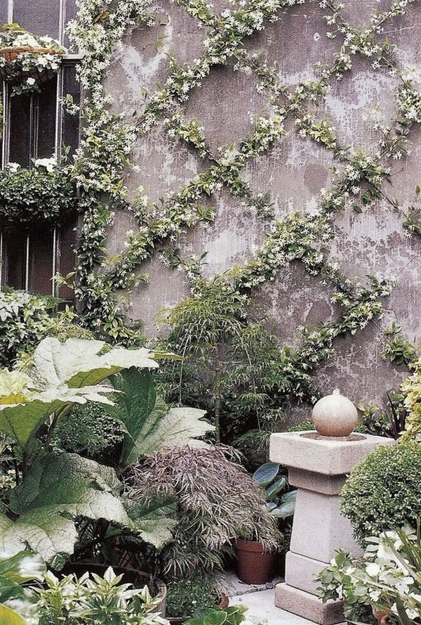 Garden Climbing Plants 10 Beautiful Garden Ideas