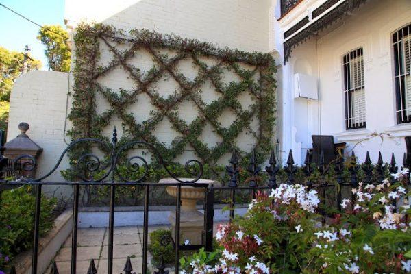 plants that grow on walls