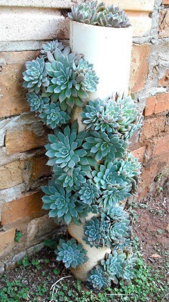 succulent planter box ideas