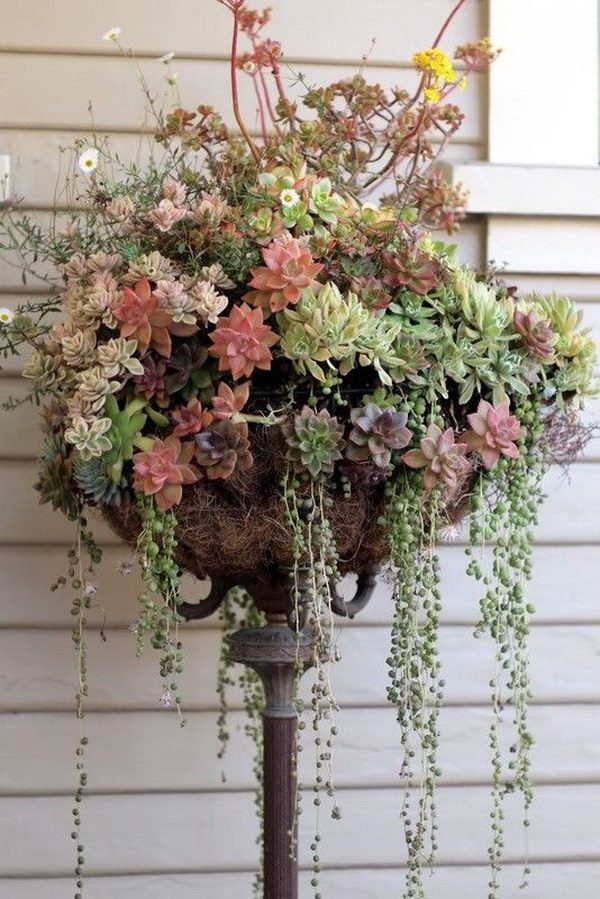 succulent plant arrangement ideas