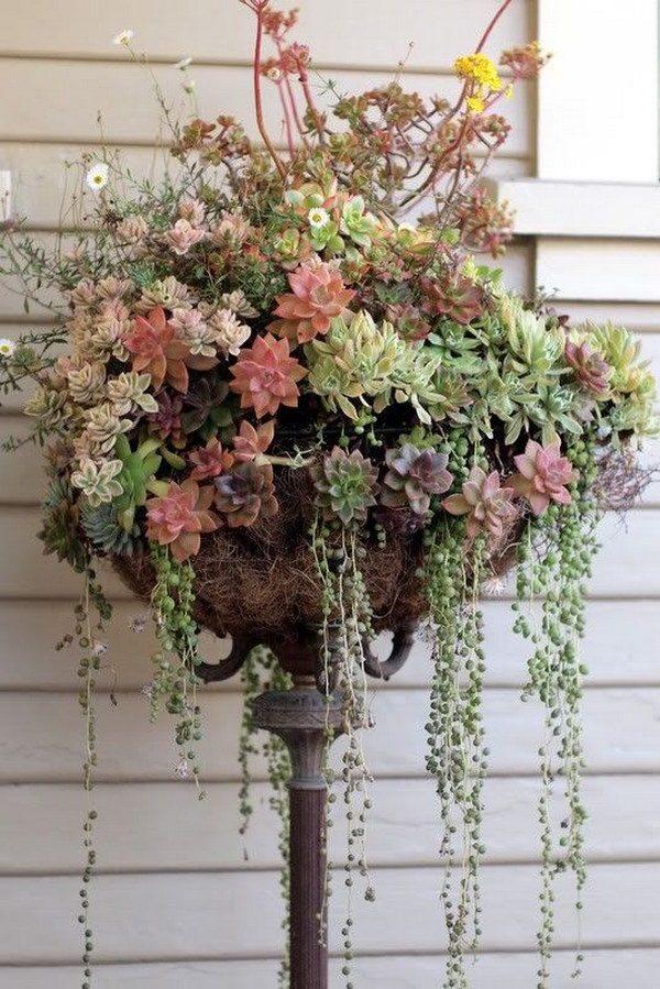 succulent plant arrangement ideas