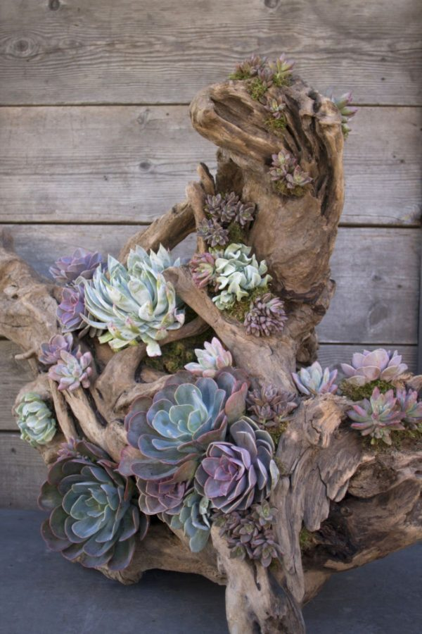 outdoor succulent planter