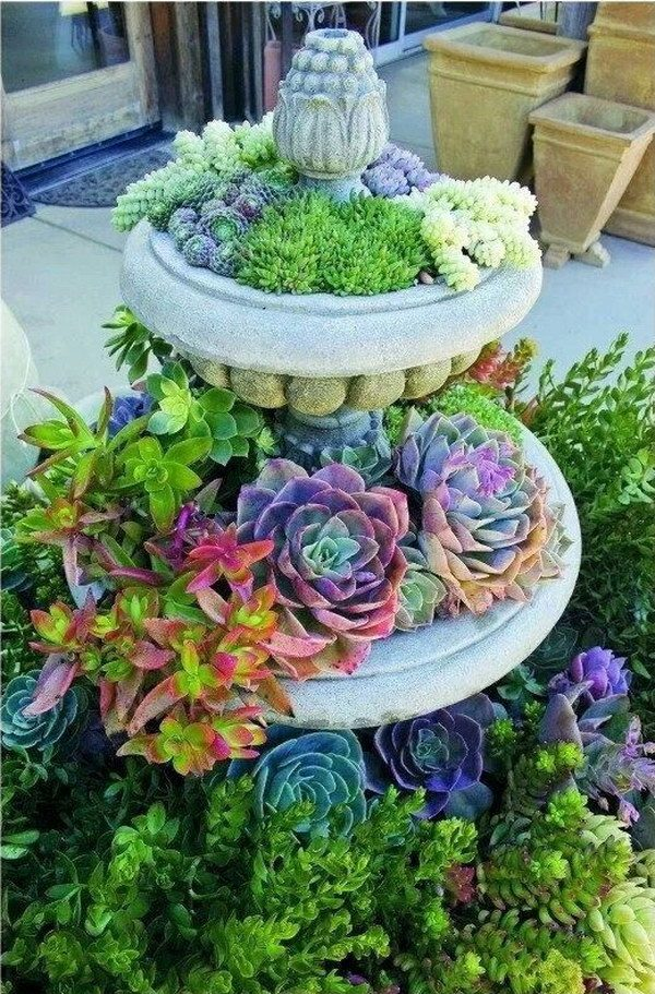 succulent display ideas