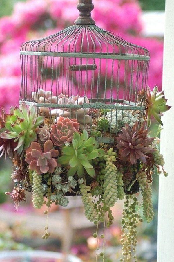 ways to plant succulents