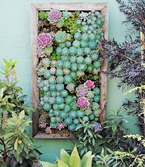 wall mounted succulent garden