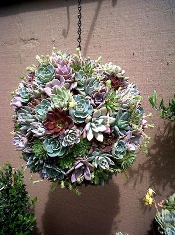 succulent plant arrangements