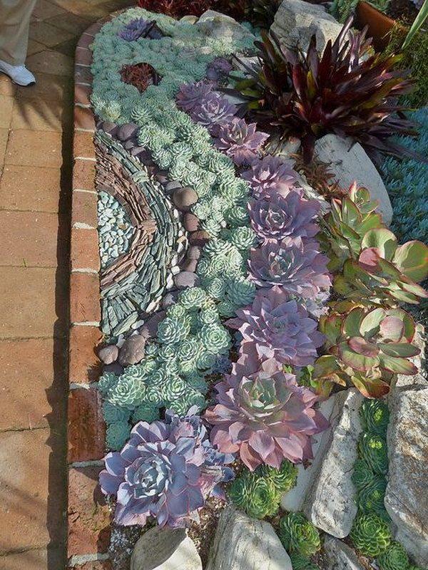 succulent front yard ideas