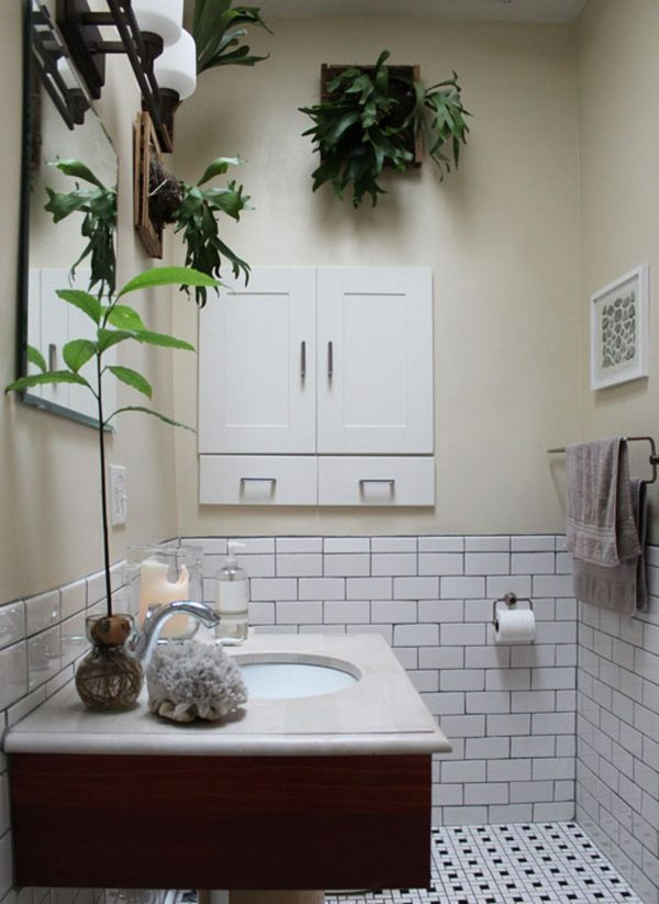 best plants for bathroom with no window